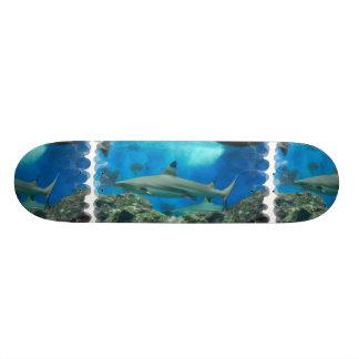 Tubarão com skate do recife