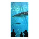 Tubarão de baleia masculino cartões com foto