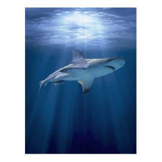 Tubarão de cruzamento cartão postal