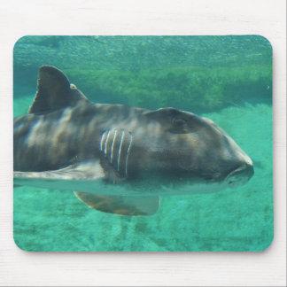 Tubarão de Jackson do porto Mousepad