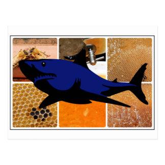 Tubarão do mel cartão postal