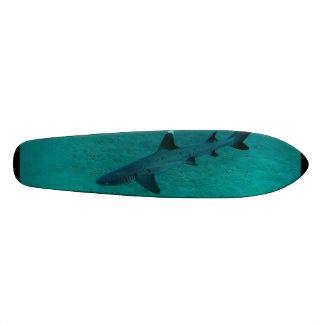 Tubarão impressionante no profundo skates