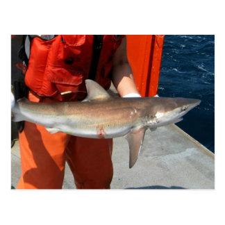 Tubarão obscuro cartao postal