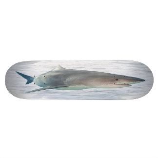 Tubarão real na água shape de skate 18,1cm