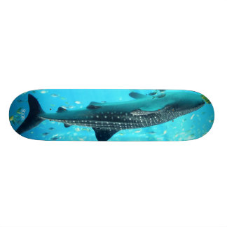 Tubarão Shape De Skate 20,6cm