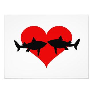 Tubarões Impressão De Foto