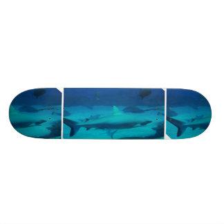 Tubarões Skates
