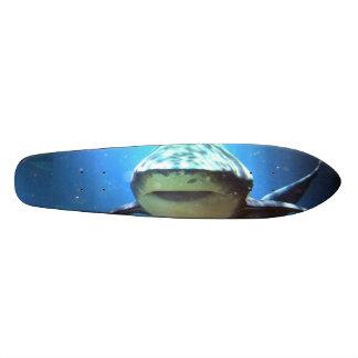 Tubarões Skate