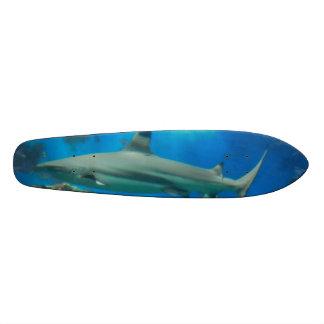 Tubarões subaquáticos skates