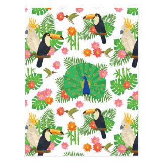 Tucan e teste padrão do pavão cartão postal