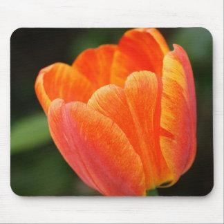 Tulipa alaranjada Mousepad