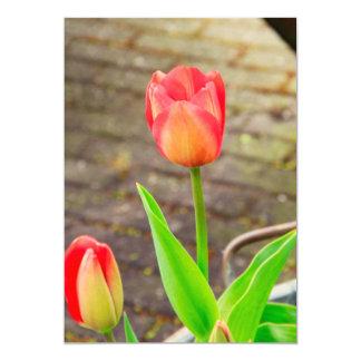 Tulipa Convite