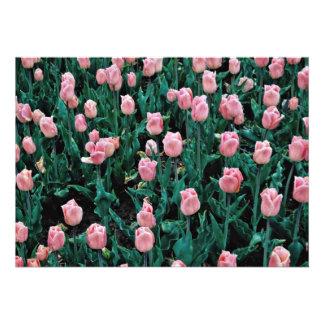Tulipas adiantadas, flores cor-de-rosa convites personalizado