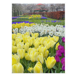 Tulipas, daffodils, e flores do jacinto de uva, cartão postal
