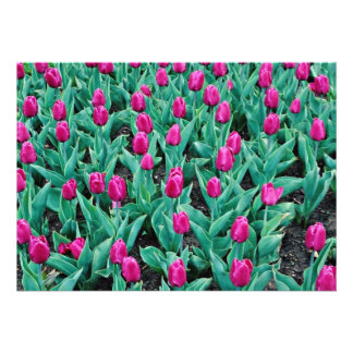 Tulipas de Triumph flores do rosa quente Convites Personalizado