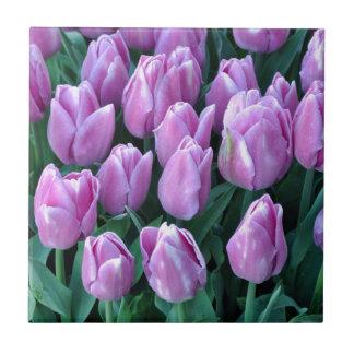 Tulipas roxas do primavera azulejo quadrado pequeno
