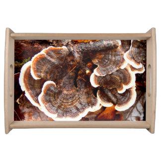 Turquia ata os fungos que servem a bandeja