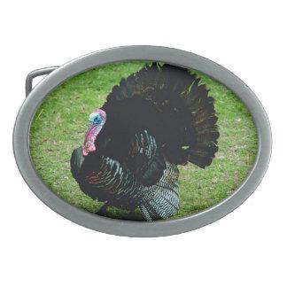 Turquia selvagem - coleção americana do mamífero