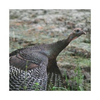 Turquia selvagem, cópia das canvas