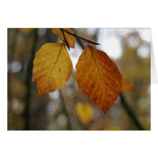 último de cores do outono cartão