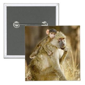 Um babuíno amarelo infantil (Papio Boton