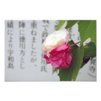 Um branco, uma flor cor-de-rosa e caráteres japone impressão de foto