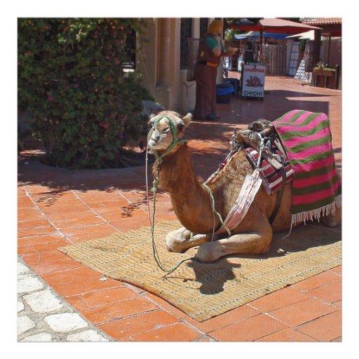 Um camelo de Brown que estabelece com sela e Foto Artes