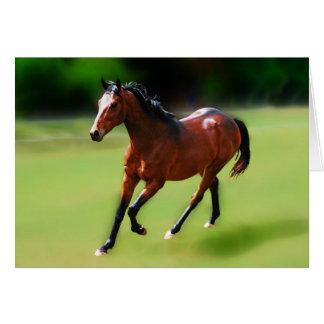 Um canter dos cavalos cartões
