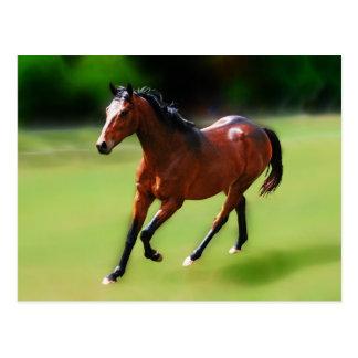 Um canter dos cavalos cartão postal