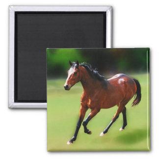 Um canter dos cavalos ima