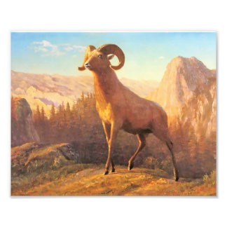 Um carneiro de montanha rochosa por A. Bierstadt Artes De Fotos