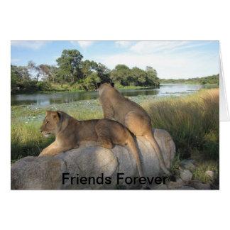 Um cartão da amizade