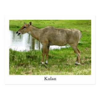 Um cartão de Kulan, animais, mula, asno