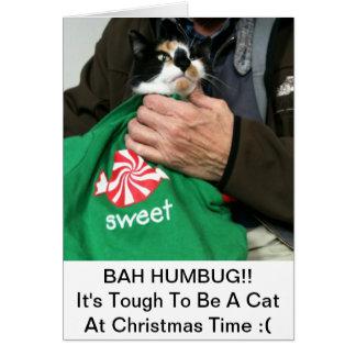 Um cartão de Natal dos amantes do gato!!!