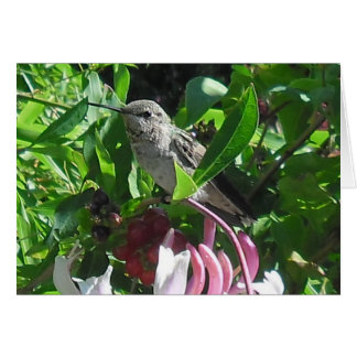 um cartão fotográfico de acalmação de um colibri