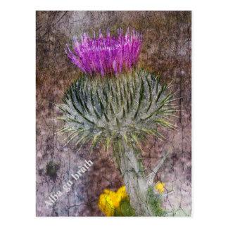 Um cartão que mostra a flor nacional de Scotland