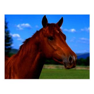Um cavalo que está orgulhoso cartão postal