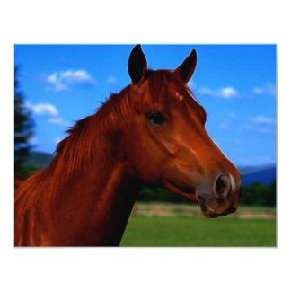 Um cavalo que está orgulhoso convite 10.79 x 13.97cm