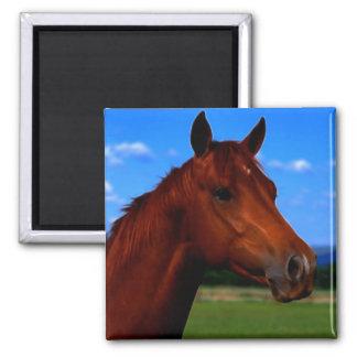 Um cavalo que está orgulhoso ímã quadrado