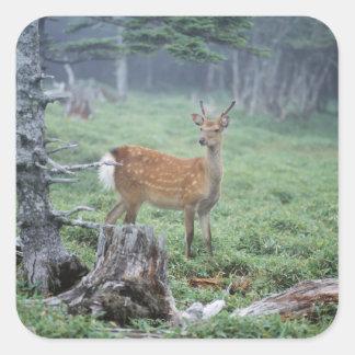 Um cervo novo em um esclarecimento da floresta adesivos quadrados