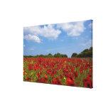 Um cheio do campo de flores vermelhas impressão de canvas esticadas