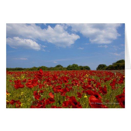 Um cheio do campo de flores vermelhas cartão