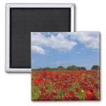 Um cheio do campo de flores vermelhas ímã quadrado