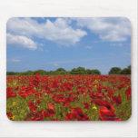 Um cheio do campo de flores vermelhas mouse pad