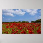 Um cheio do campo de flores vermelhas poster