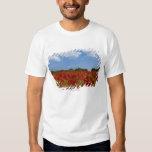 Um cheio do campo de flores vermelhas t-shirts