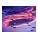 Um composto da foto de Sandhill cranes em vôo Cartões Postais