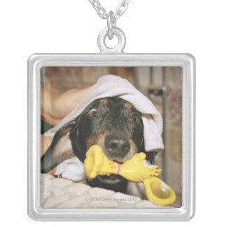 Um dachshund que está sendo banhado colar personalizado