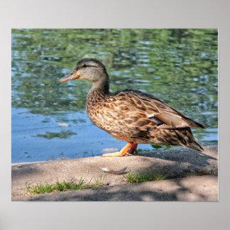 Um dia no impressão do poster da lagoa do pato