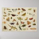 Um estudo dos insetos impressão